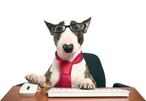犬とパソコン